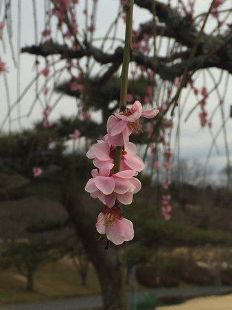 Inokura Onsen: photo2.jpg