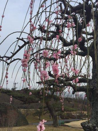 Inokura Onsen: photo3.jpg