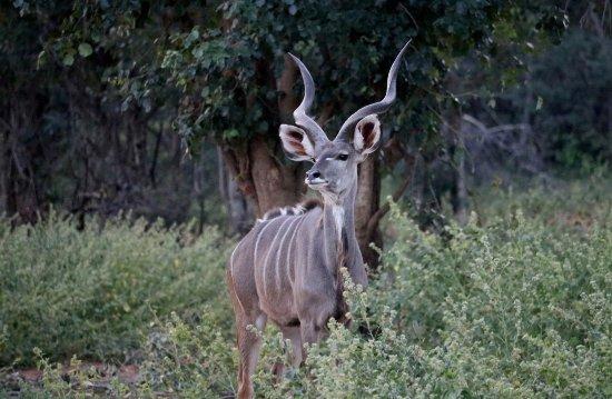 Limpopo Province Resmi