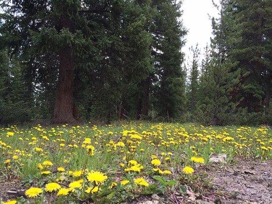 Dubois, WY: wild flowers