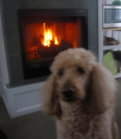 McBee Cottages: My poodle Polly enjoying the warm gas fireplace on a rainy day