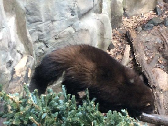 Apple Valley, MN: Wolverine
