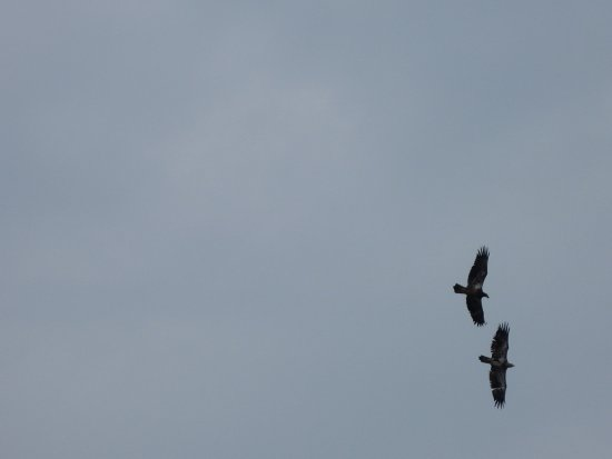 Huron, OH: 2 flying over the water