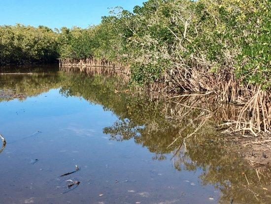 Caladesi Island State Park : quiet lagoon