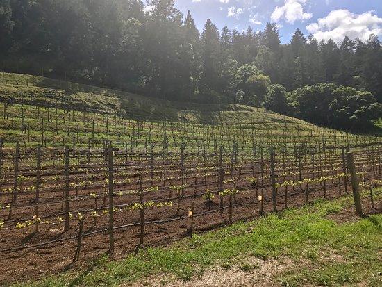 Pine Ridge Winery照片