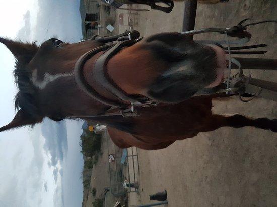 Cerrillos, NM: Broken Saddle Riding Company
