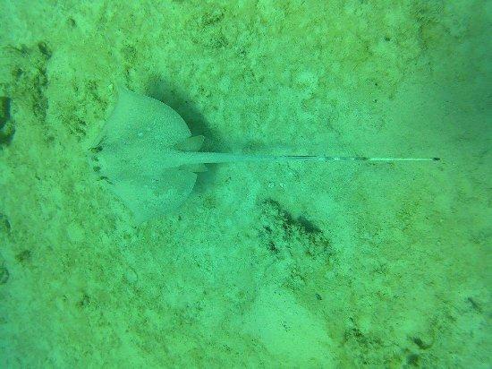 Rawai, Thailand: Infinity Ocean Diving - Private Diving