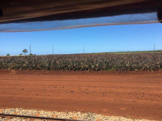 Wahiawa, HI: Dole Plantation