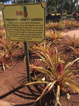 Photo of Farm Dole Plantation at 64-1550 Kamehameha Hwy, Wahiawa, HI 96786, United States