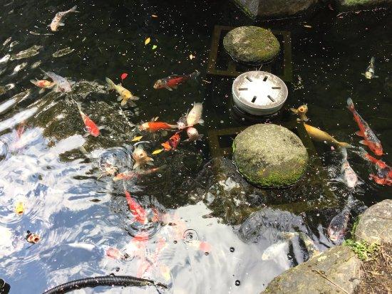 ANA Crowne Plaza Kyoto: photo6.jpg