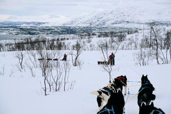 Arctic Adventure Tours: gorgeous views of mountains and sea