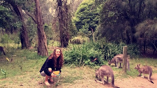 Australian Surf Tours: Wake up with kangaroos
