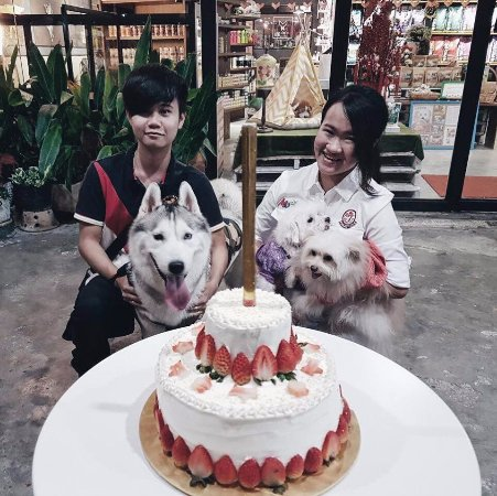 Bayan Lepas, Μαλαισία: Birthday Party for Husky!