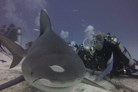 Phantom Divers: photo0.jpg