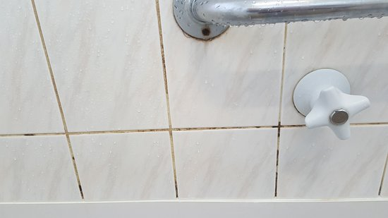 Eden, Australia: Grotty sponges, dirty appliances and tiles have never been cleaned. Somebody please sack the roo