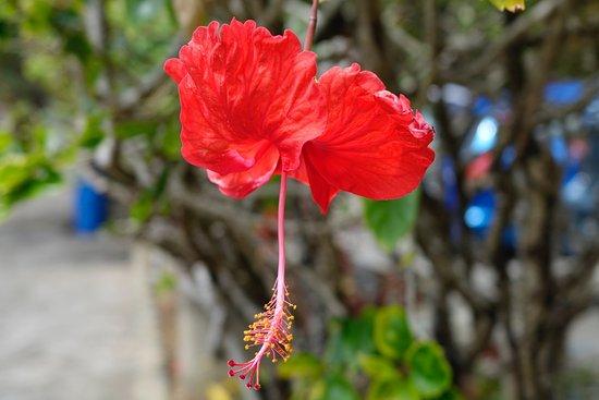 Speyside, Tobago: photo6.jpg