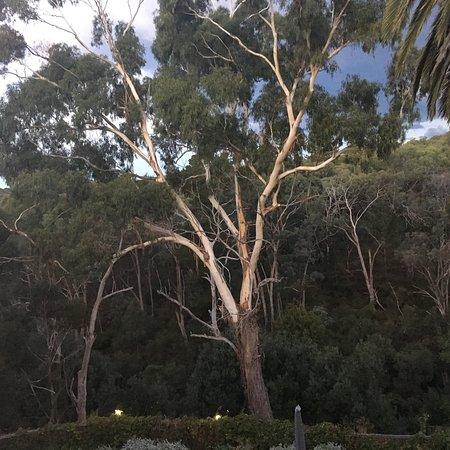 Hepburn Springs, Australia: photo2.jpg