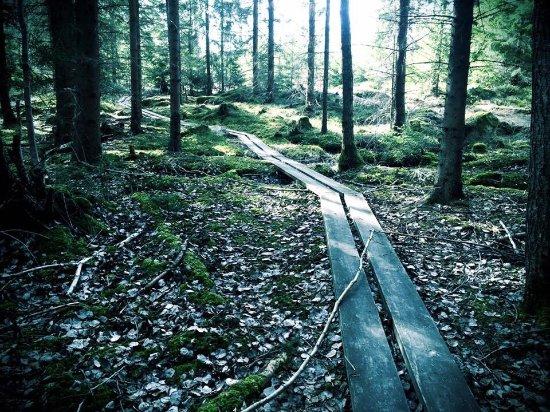Varmdo, Szwecja: photo6.jpg