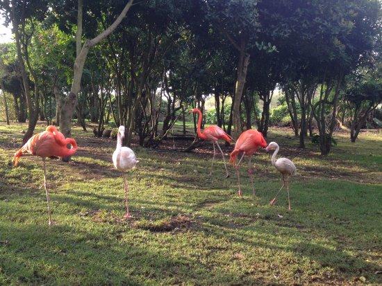 Birds of Eden: LONNNG LEGS