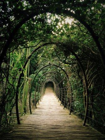 Birds of Eden: Beautiful bridge