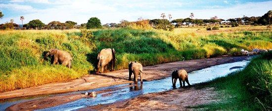 African Jambo Safaris