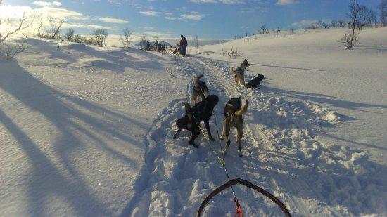Arctic Adventure Tours: tra la neve e nient'altro