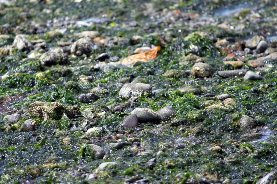 Des Moines, WA: Classic Puget Sound beach at low tide.