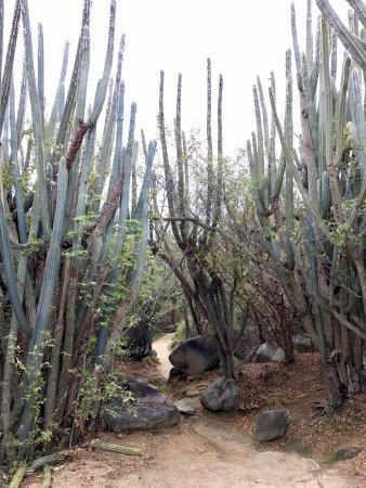 Frenchman's Cay: The walk down to the Baths in Virgin Gourda