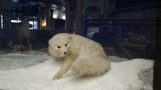 Российский государственный музей Арктики и Антарктики: P_20170328_131204_large.jpg