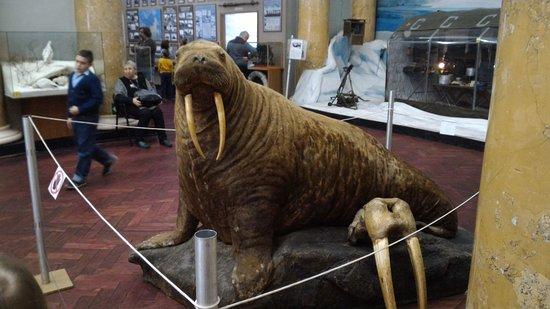 Российский государственный музей Арктики и Антарктики: P_20170328_130907_large.jpg