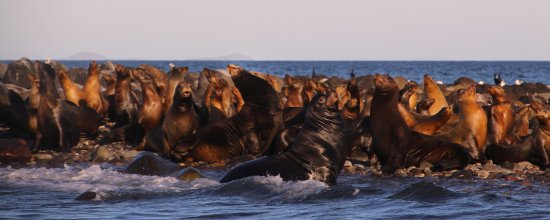 nearby sea lion rookery is great for snorkeling