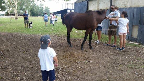 Brandsen, Argentina: En la Granja con los caballos