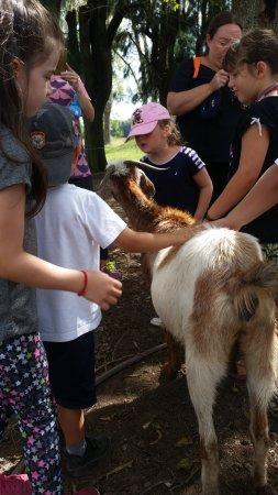 Brandsen, Argentina: En la Granja con la Cabra