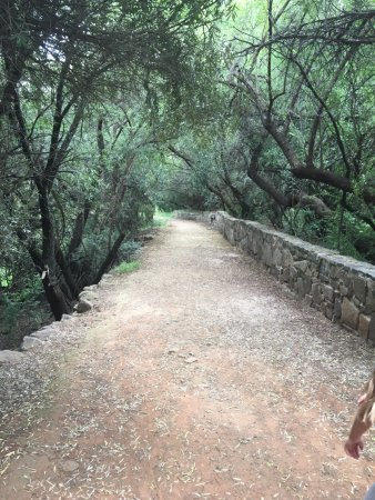 Free State National Botanical Garden : Bridge on the way to the bird hide, a must see!