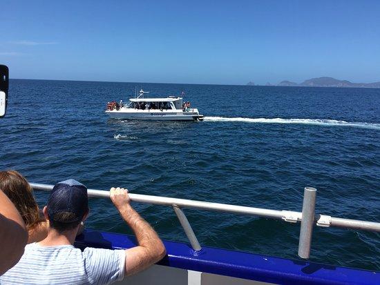 Paihia, Nueva Zelanda: Dolphin chasing