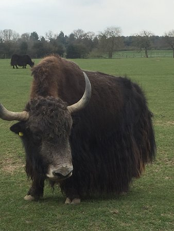 Dunstable, UK: ZSL Whipsnade Zoo