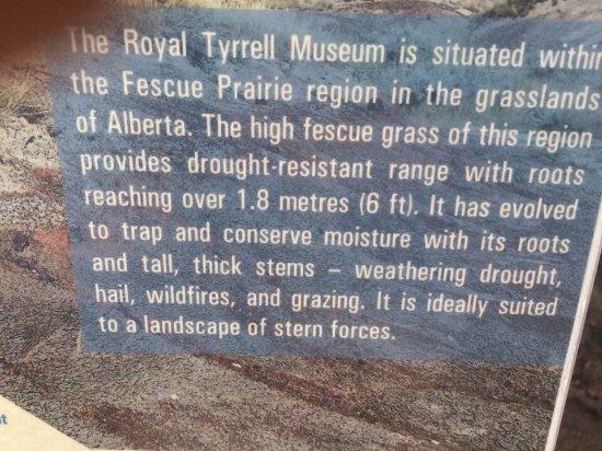 Royal Tyrrell Museum: photo4.jpg