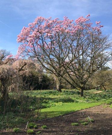 Haywards Heath, UK: Spring walk 2017