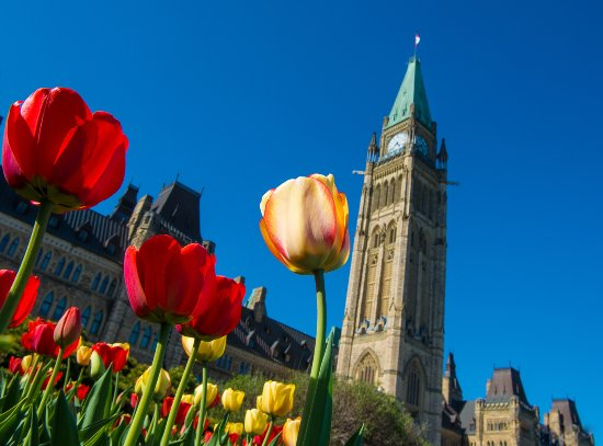 Ottawa, Canada: Tulips and Peace Tower - Neil Robertson