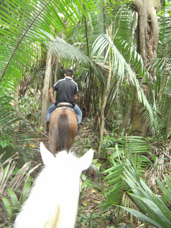 Belmopan, بليز: Through the Jungle