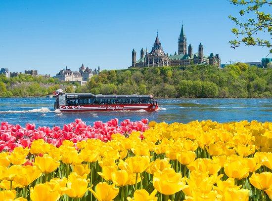 Ottawa, Canada: Lady Dive Amphibus and Parliament Hill - Neil Robertson