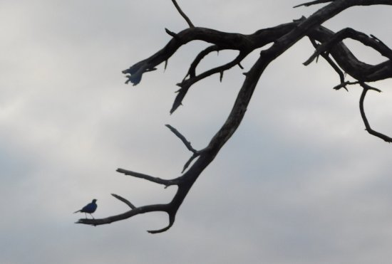 Mala Mala Private Game Reserve, Sydafrika: Wildlife at MalaMala