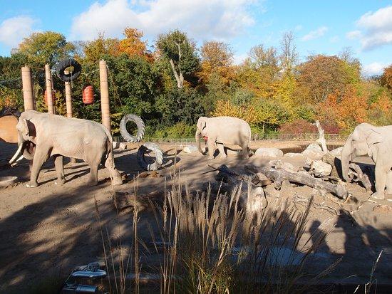 frederiksberg zoo åbningstider