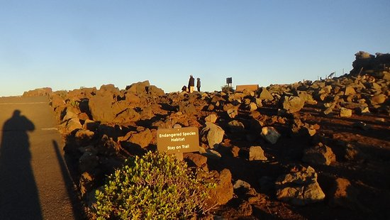 Kula, HI: Haleakala toward crater