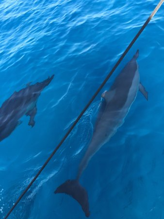 Kamuela, Hawaï: Spinner dolphins on our Authentic Hawaiian Sails adventure.