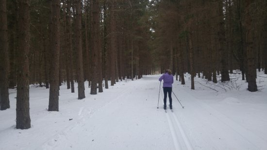 Ripton, Вермонт: Fresh and Silent but for the whisper of the pines and swish of the skis.