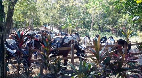 Rincon de La Vieja, Kostaryka: Ready to ride!