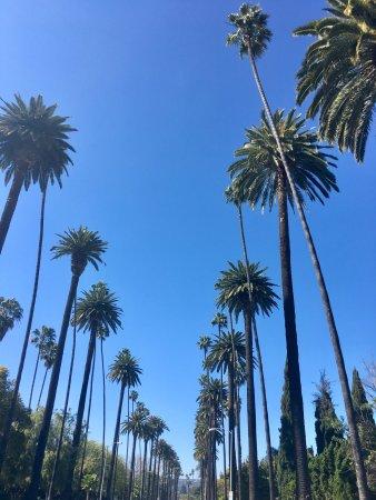 The Beverly Hilton: photo9.jpg