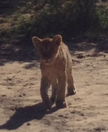 Kwandwe Private Game Reserve, Sudáfrica: iPhone picture .. but so cute