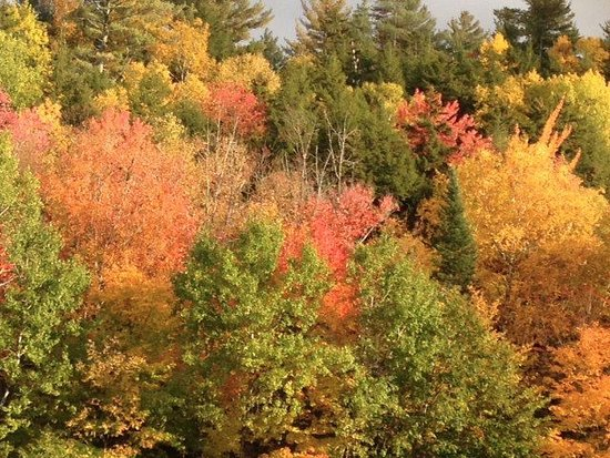 Welch Mountain Chalet Bed & Breakfast: Fall Foliage